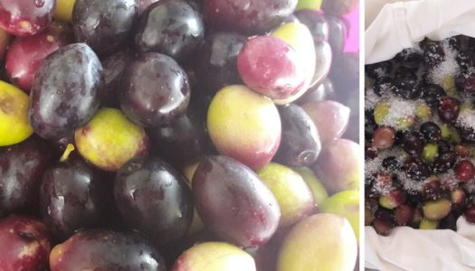 Your Own table olives – Part 1